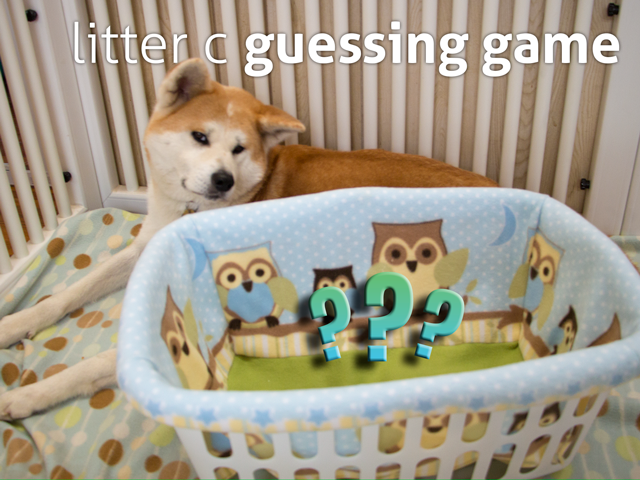 LitterC_GuessingGame